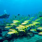 tips-scuba-diving-menyelam